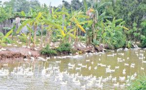Ô Nhiễm nguồn nước tại Thái Bình